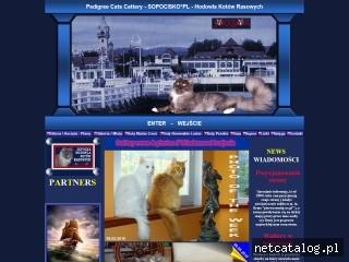 Zrzut ekranu strony www.sopocisko.com.pl